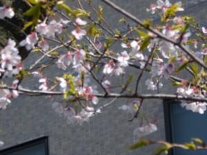 japan-2009-045